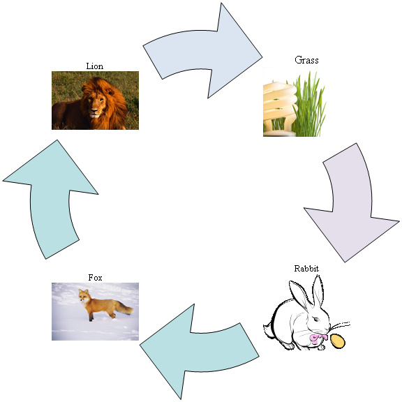 diagram of a food chain